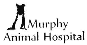 Read more about the article Murphys Animal Hospital