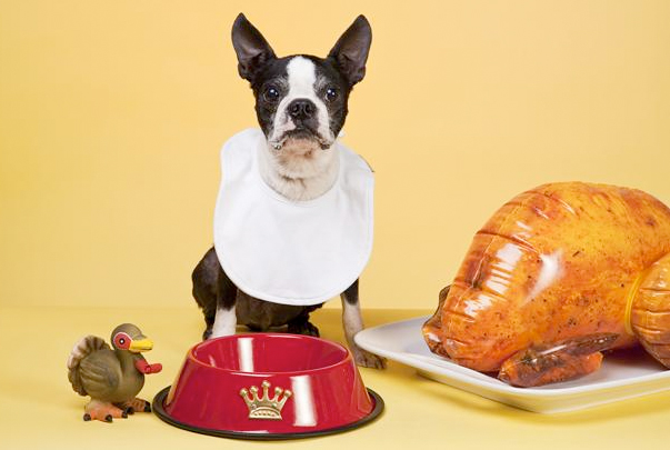 Read more about the article Thanksgiving Safety Tips