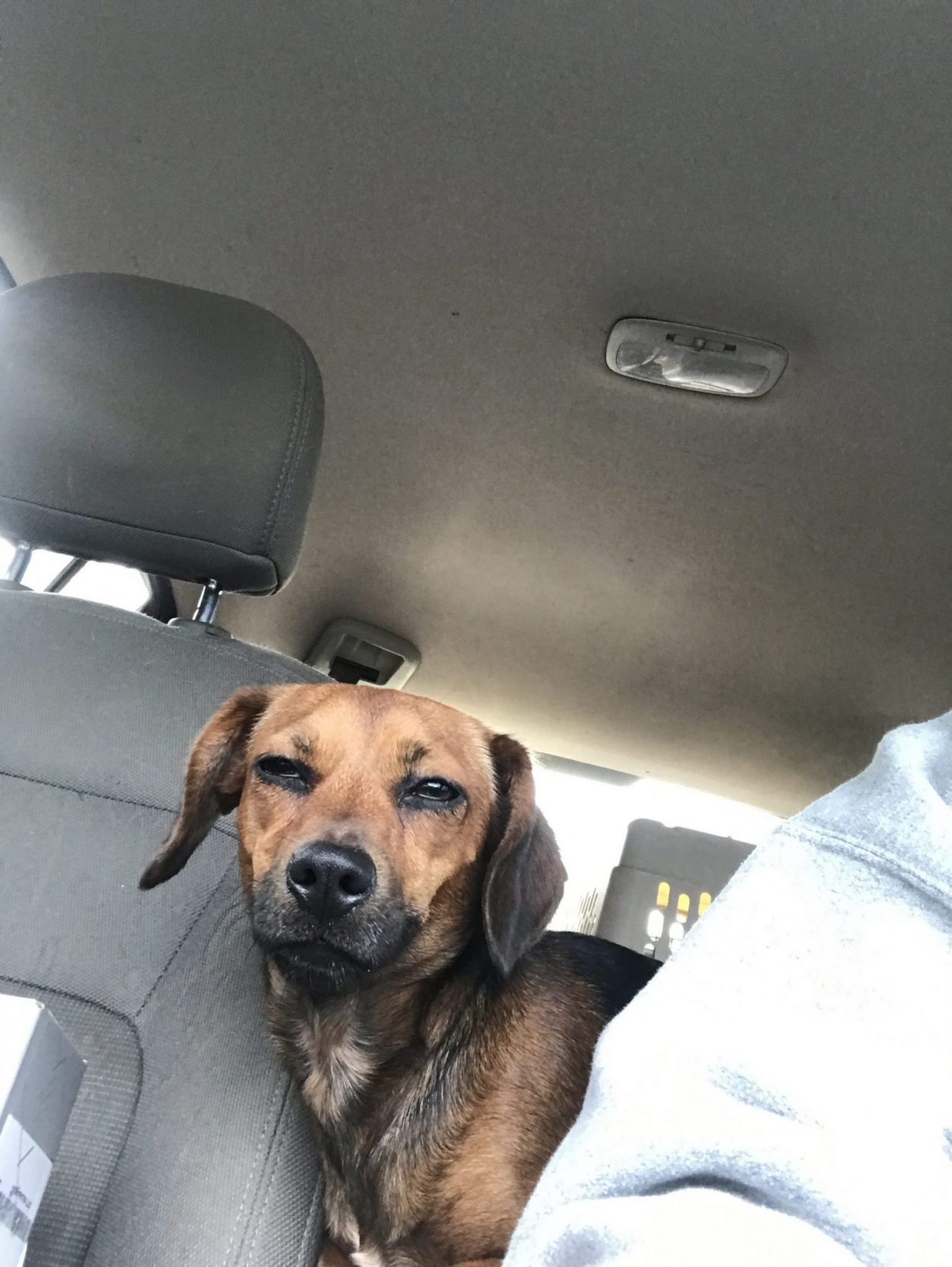 Read more about the article Uma gets a freedom Ride!